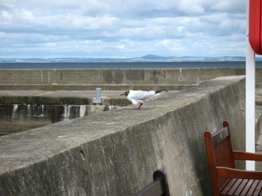 Seagull: Justin's nemesis