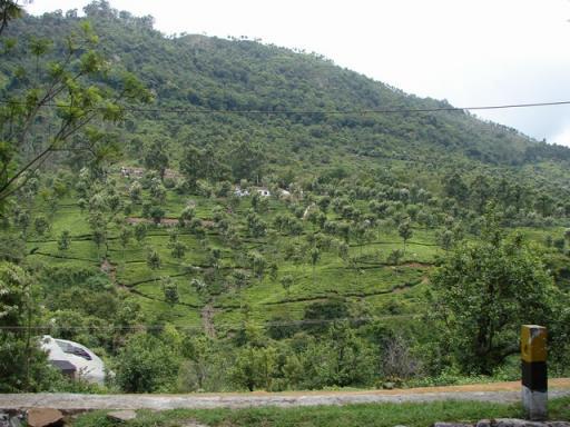 Coonoor 079 vast land scapes