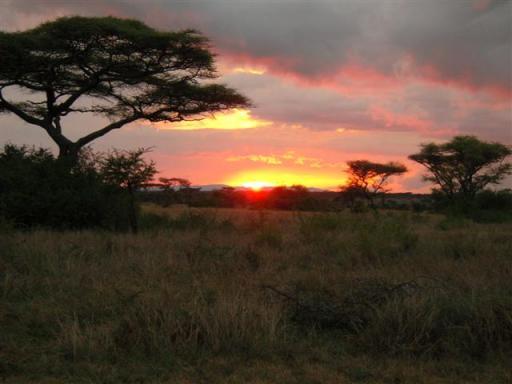 Solnedgang over Serengeti