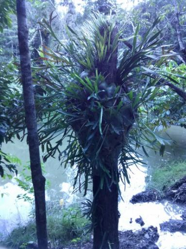 Plant Life in Rainforest
