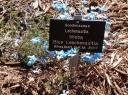 York Wildflowers