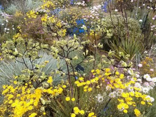 Kings Park Wildflowers 4
