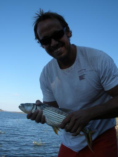 Stu's Tiger Fish