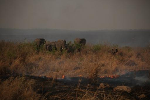 Elephant trapped in bush fire at Kruger