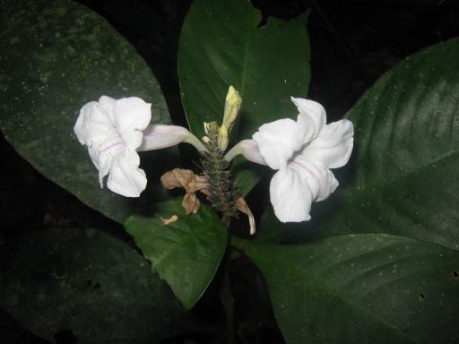 Tour de selva - Urwaldtour