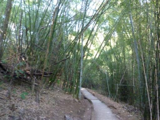 Dense bamboo forests on the trail to hellfire pass